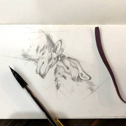 Day 169: Wolf Snuggles