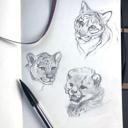 Day 212: Cub Sketches