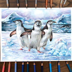 Day 247: Chinstrap Penguins