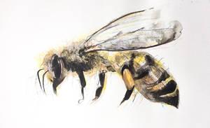 Bees need help