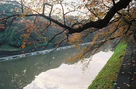 Autumn in Tokyo, 2005
