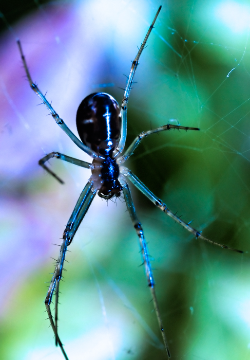 Arachnophobia Therapy by pro-non