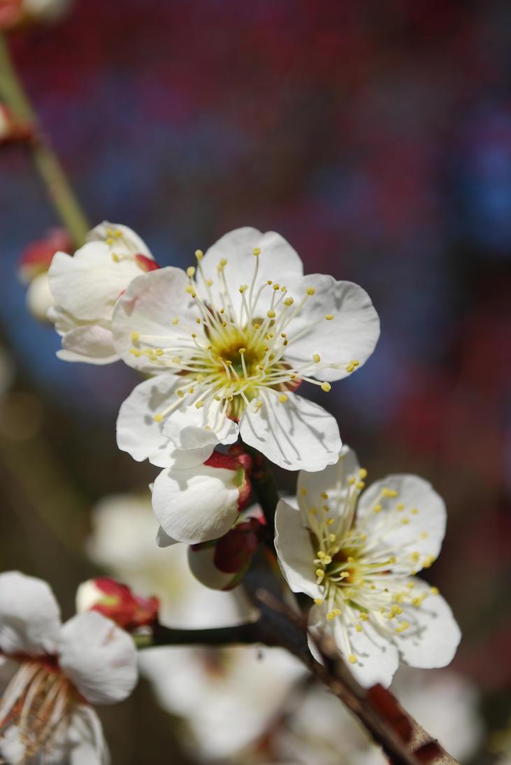 Japanese Flowers And Plants By Owenhuwmorgan On Deviantart
