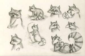 Raccoon Study by WinterImp