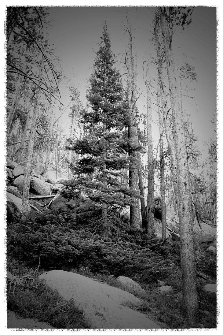 Wyoming by BromBones13