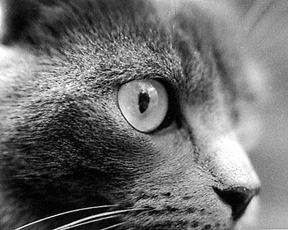 cat 9 by Aurelio-escobar
