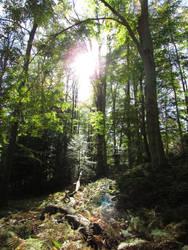 Woodland 1 by bunigrl