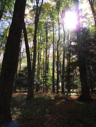 Woodland 2 by bunigrl