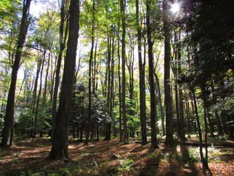 Woodland 3 by bunigrl