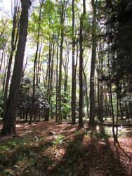 Woodland 4 by bunigrl