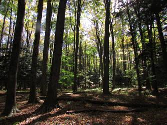 Woodland 5 by bunigrl