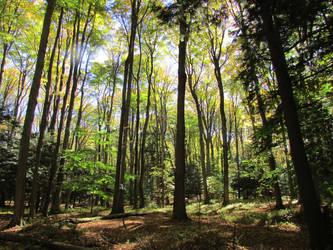 Woodland 6 by bunigrl