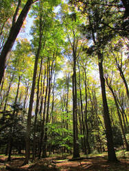 Woodland 7 by bunigrl