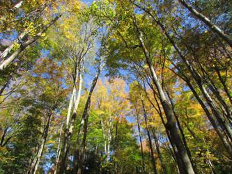 Woodland 8 by bunigrl