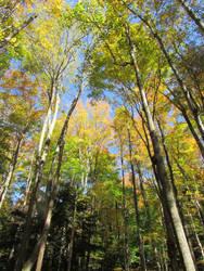 Woodland 9 by bunigrl