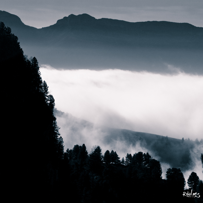 Sapins dans la brume by rdalpes
