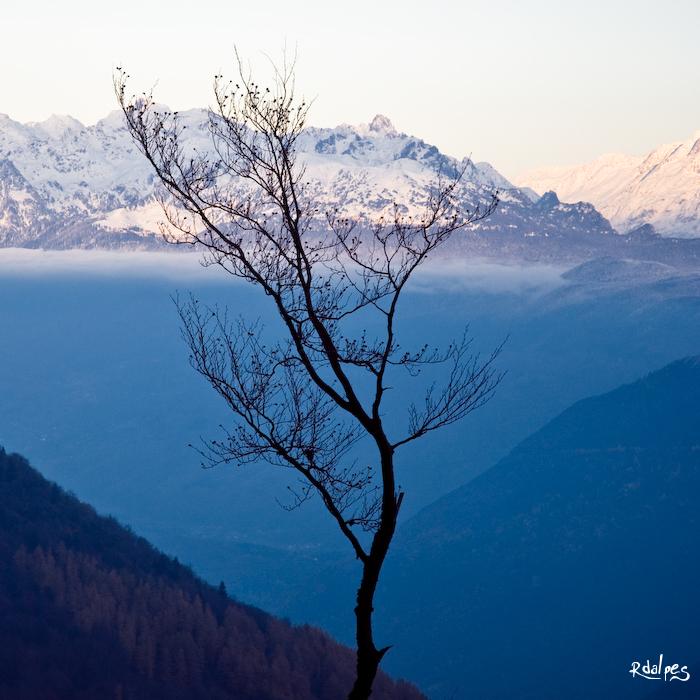 Branches de novembre by rdalpes