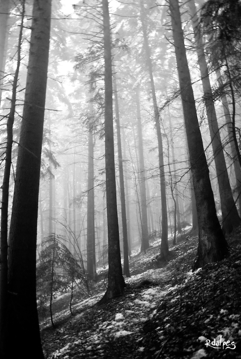 Black forest by rdalpes