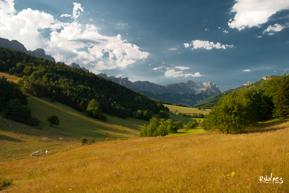 Fields an afternoon by rdalpes