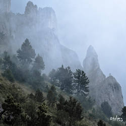 pines, mist and cliff by rdalpes