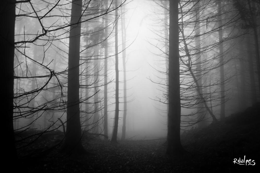 Mist of november by rdalpes