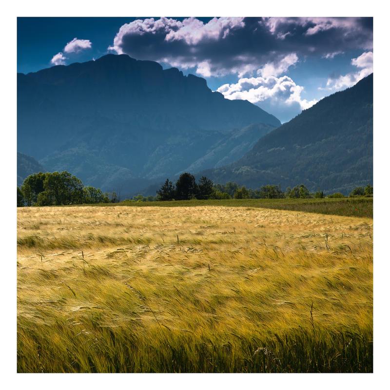 a field by rdalpes