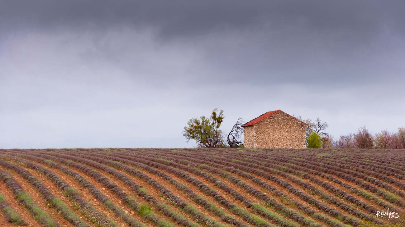 Provence by rdalpes