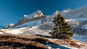 Sapin by rdalpes