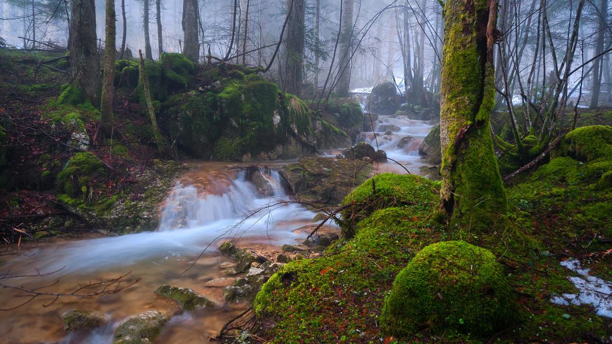 Le ruisseau by rdalpes