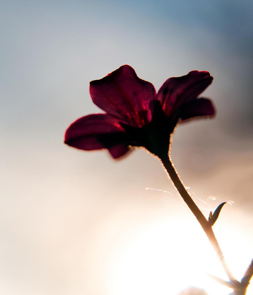 un soir du printemps by rdalpes