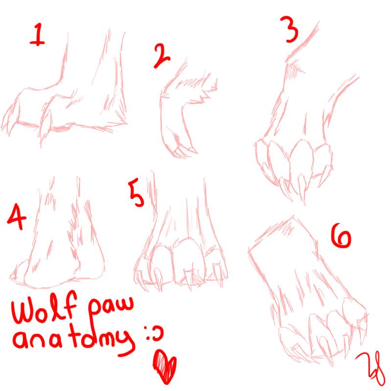 Wolf Paw Anatomy c: by FKandFriends on DeviantArt
