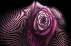 lavender rose by GeaAusten