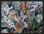 FROST AGAIN