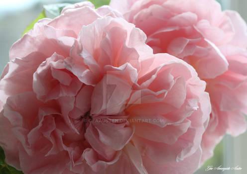 ROSES FOR A PRINCESS