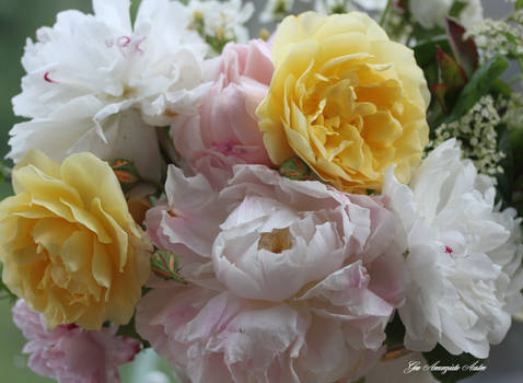 BEST ROSESE AND PEONIES
