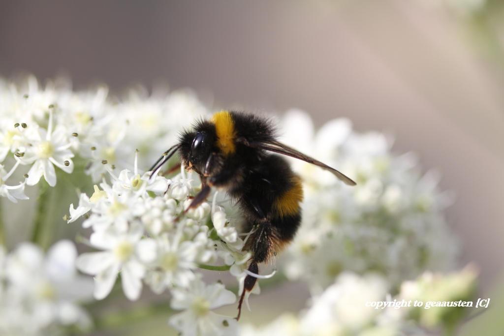 LOVELY BEE 4 by GeaAusten