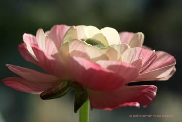 SMALL FLOWER by GeaAusten
