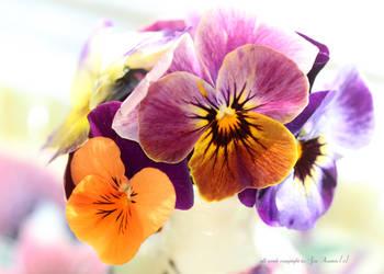 Beautiful Violas v by GeaAusten