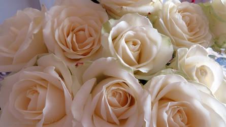 Cream Roses by GeaAusten