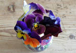 Viola's mixed colours by GeaAusten