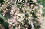 Wild Grass in my garden by GeaAusten