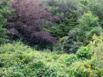 Trees in North Devon by GeaAusten