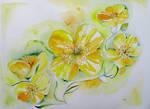 Buttercups watercolour w.i.p