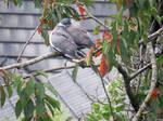 Friendly wood pigeons