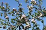 an abundance of blossom