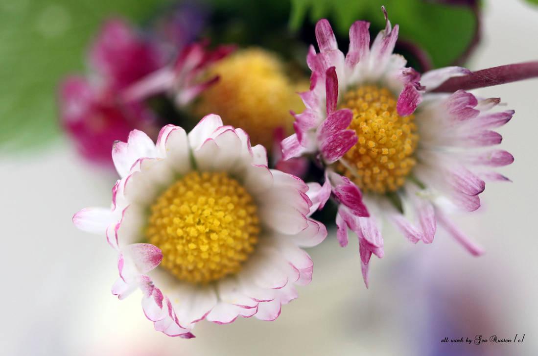 pretty little daisies