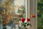 Reflections in the window by GeaAusten