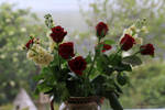 Rich Red Roses