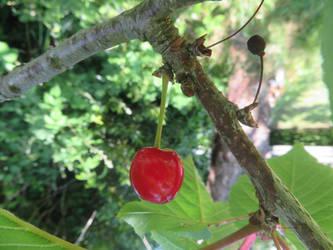 Ripe Cherry by GeaAusten