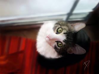 my cat by ntdespoina